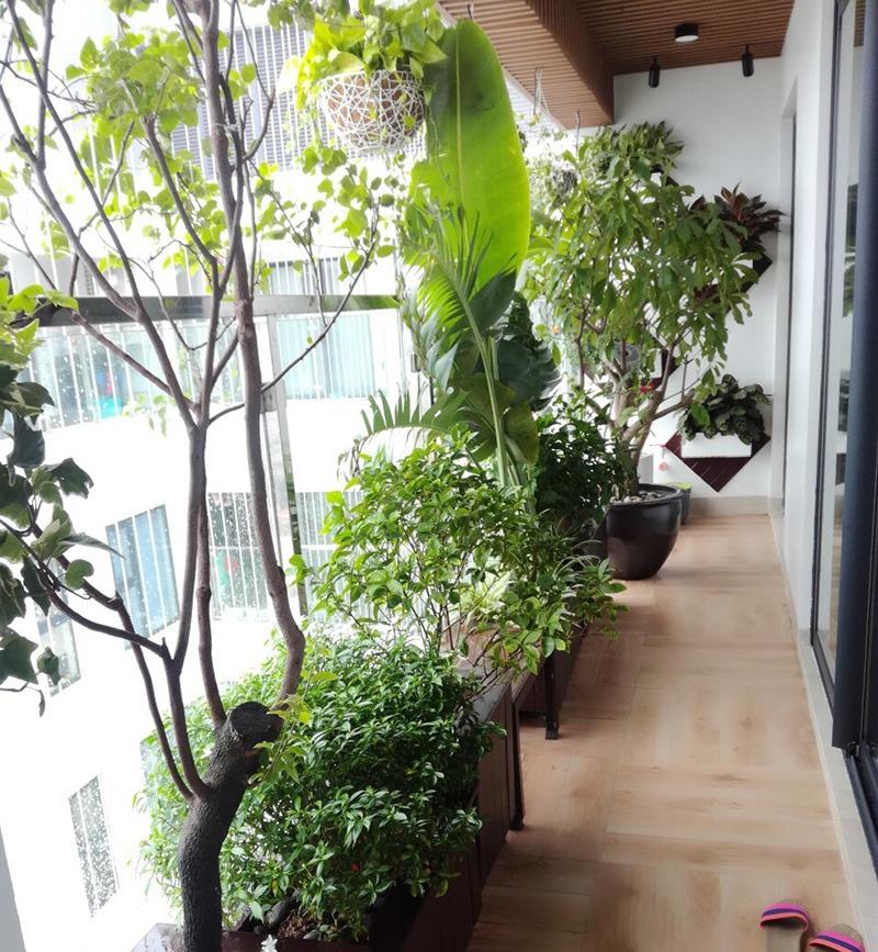 Vườn cho ban công chung cư - Mongarden