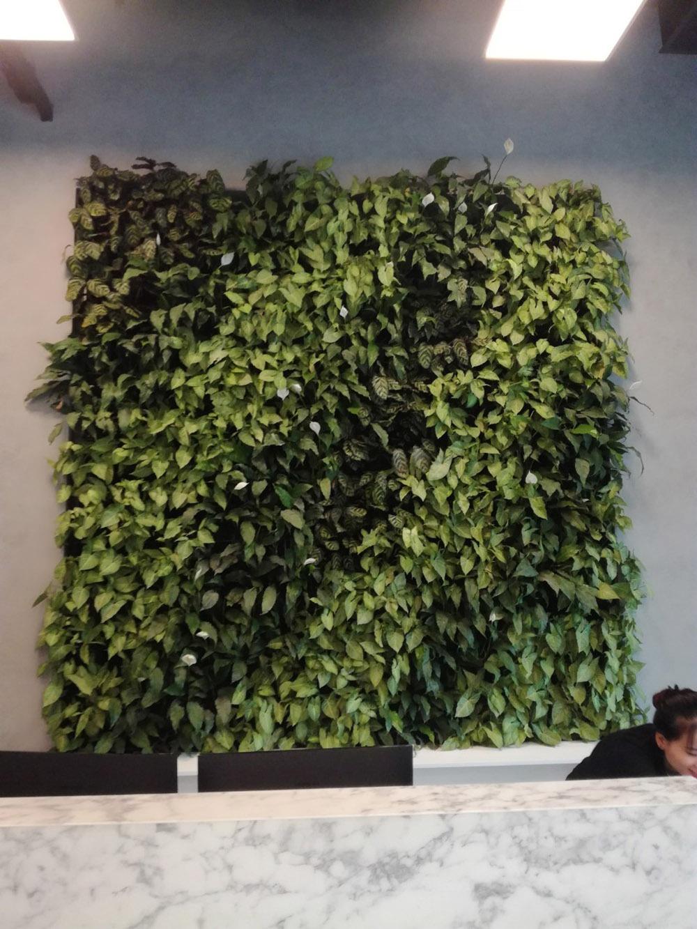 Hình ảnh hoàn thiện tường cây xanh