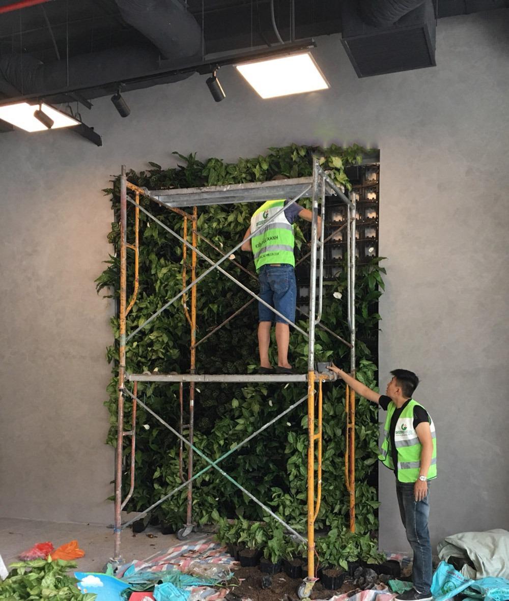 Thi công dự án tường cây xanh cho tòa nhà Tràng An Complex
