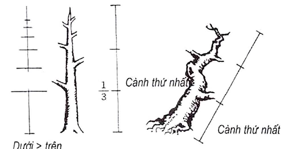Kỹ thuật cắt tỉa cành cây cảnh