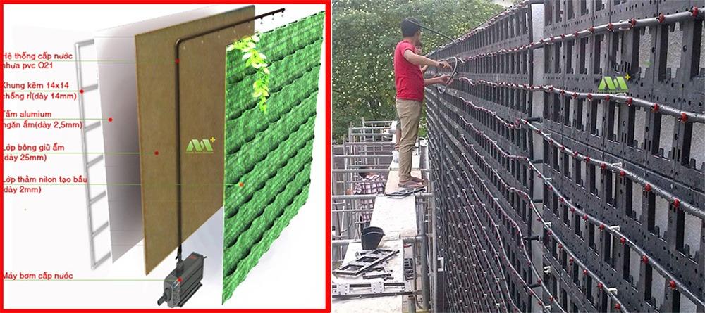 Hướng dẫn chăm sóc tường cây xanh