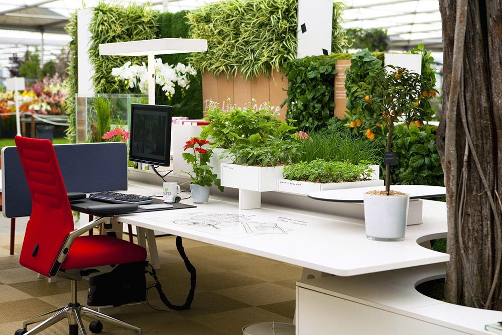 Văn phòng xanh cho công ty - Mongarden
