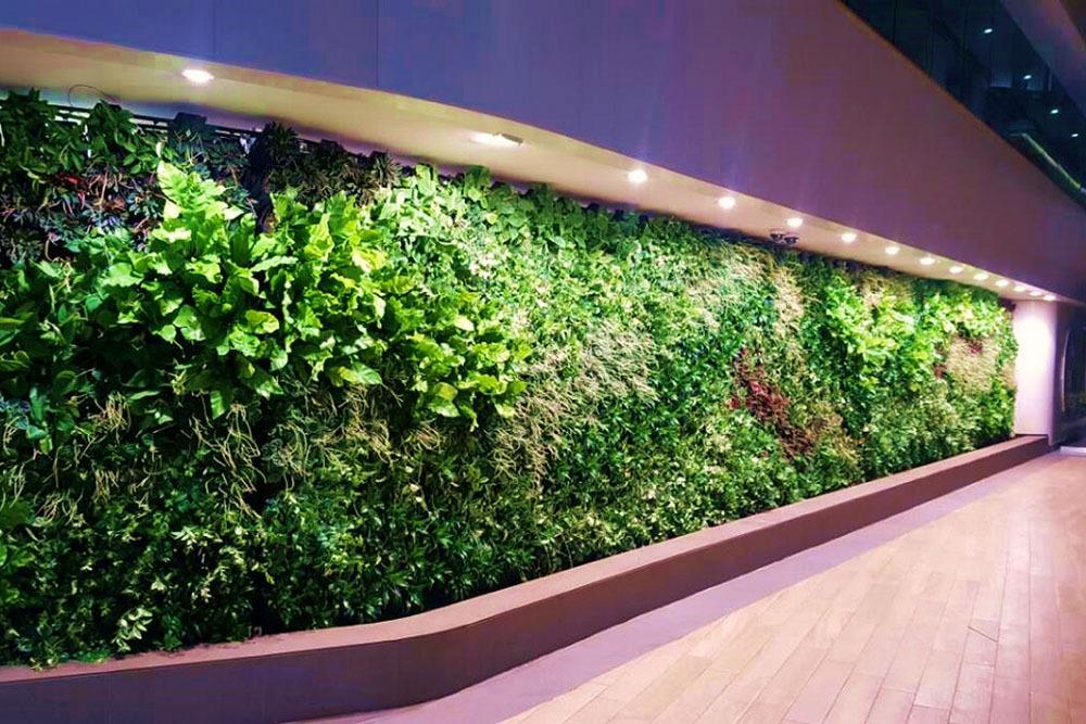 Tường cây xanh cho nội thất văn phòng - Monagrden