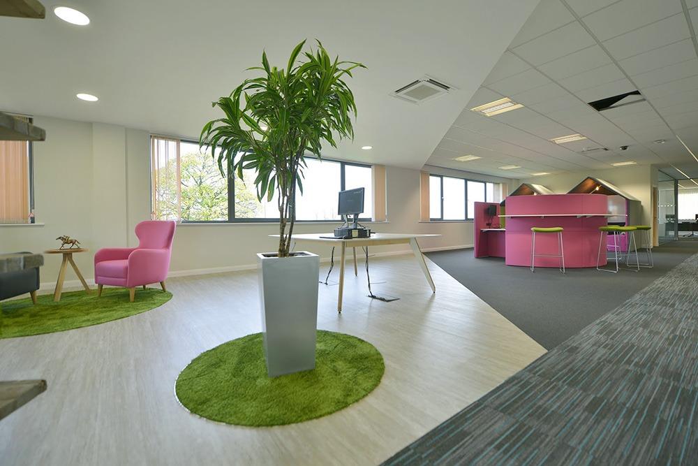 Cây nội thất cho văn phòng làm việc - Mongarden