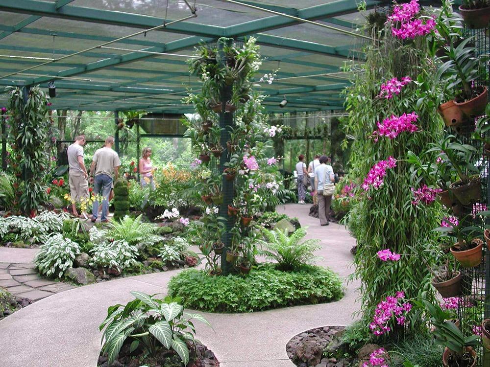 Vườn Lan tuyệt đẹp cho những ai đam mê vẻ đẹp của những loài Lan
