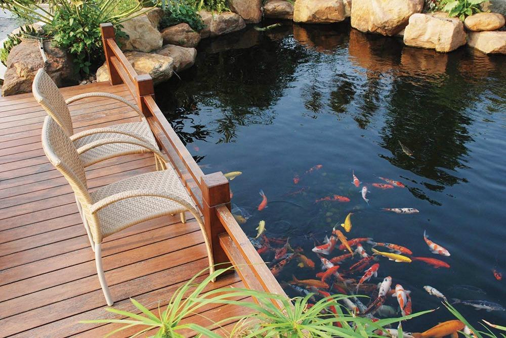 Tổng hợp mẫu thiết kế hồ cá Koi tuyệt đẹp cho khu vườn của bạn