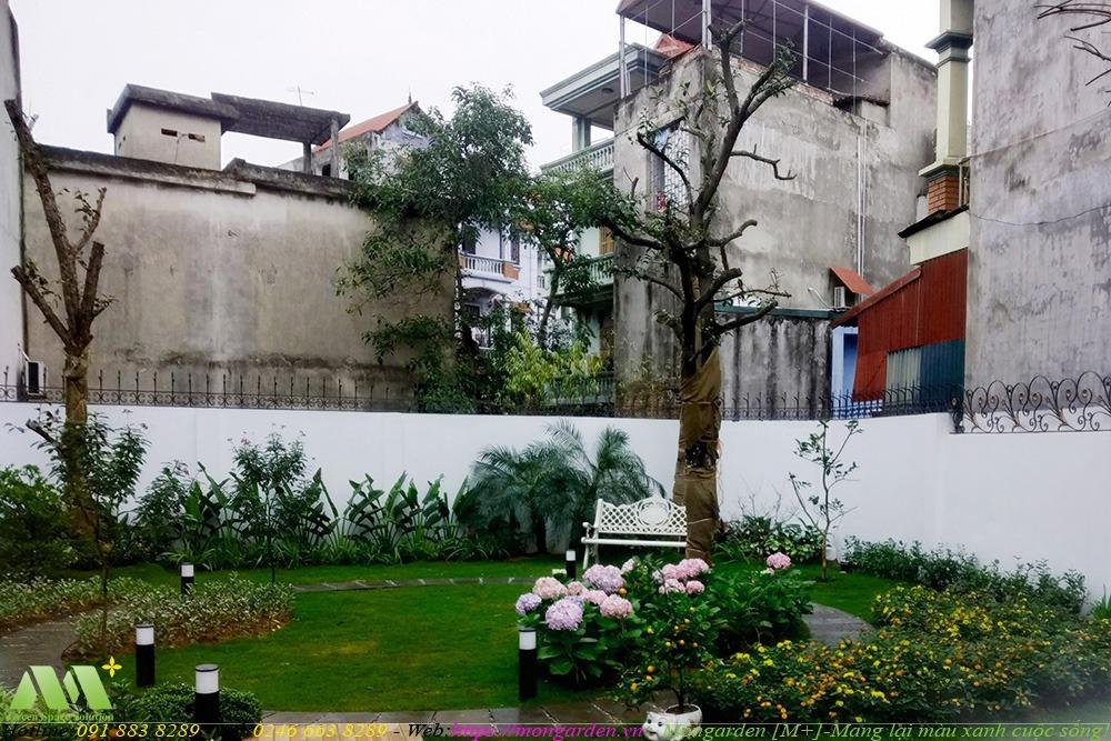Chăm sóc, bảo dưỡng sân vườn nhà anh Dũng - Vĩnh Phúc