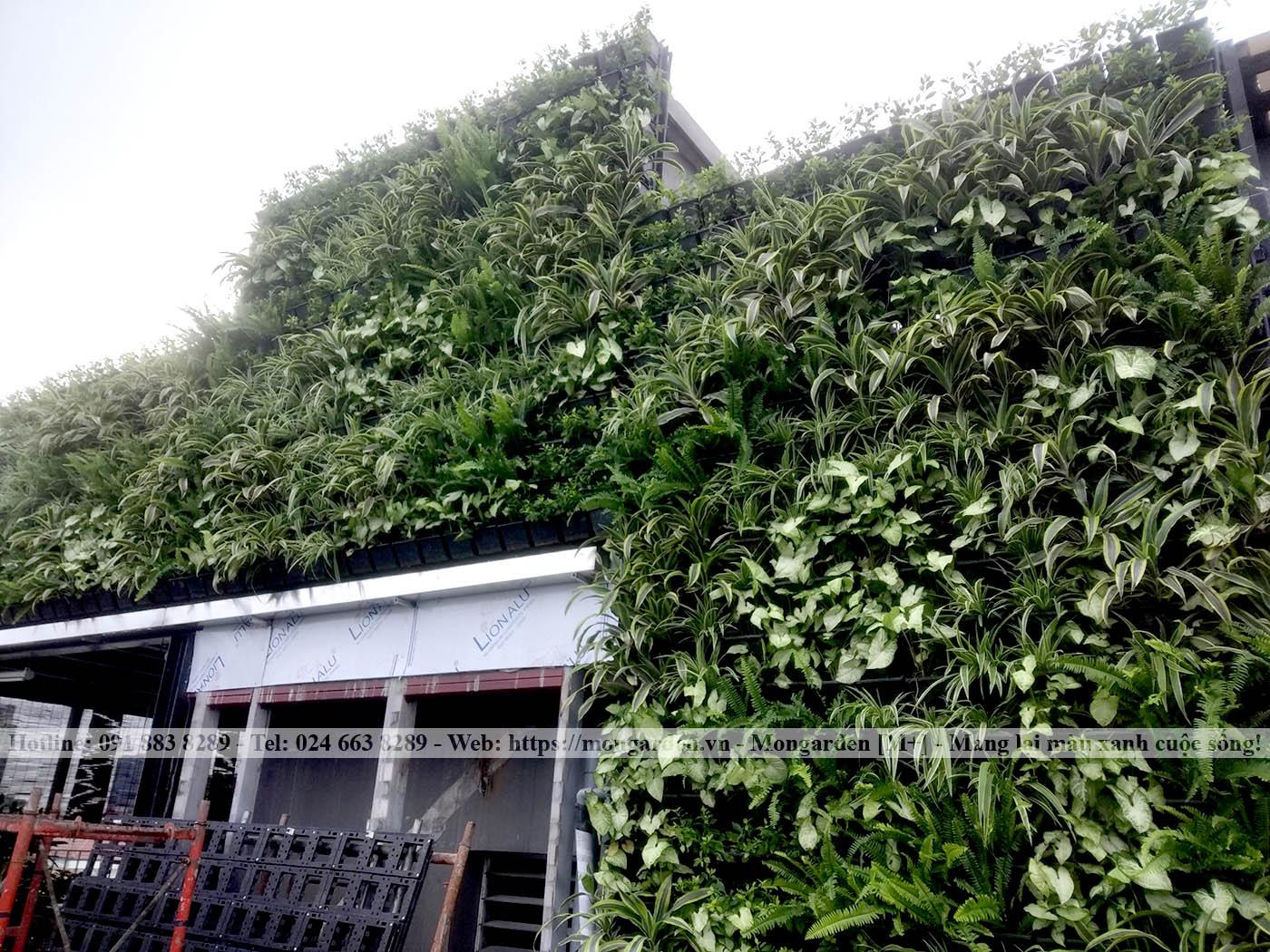 Thi công tường cây xanh - Mongarden Việt Nam