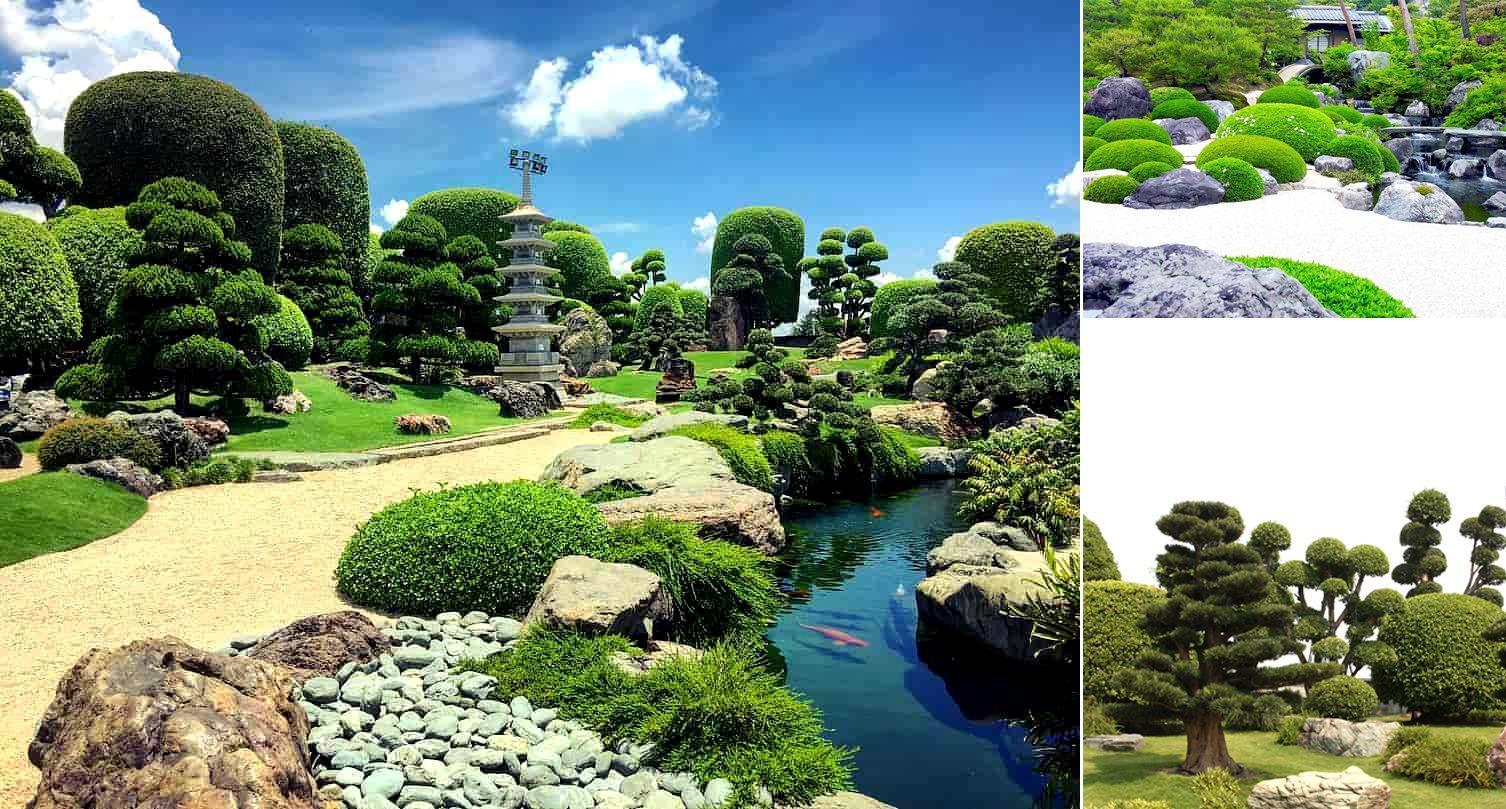 Cây xanh sử dụng trong sân vườn phong cách Nhật Bản