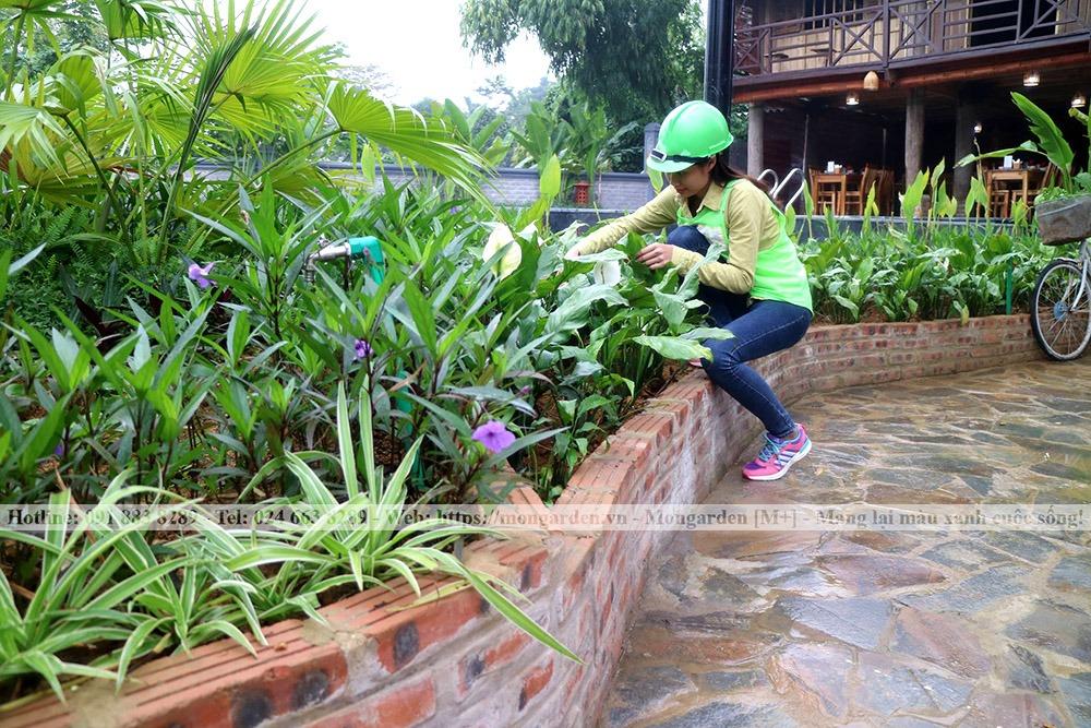Cắt tỉa chăm sóc cây trong sân vườn