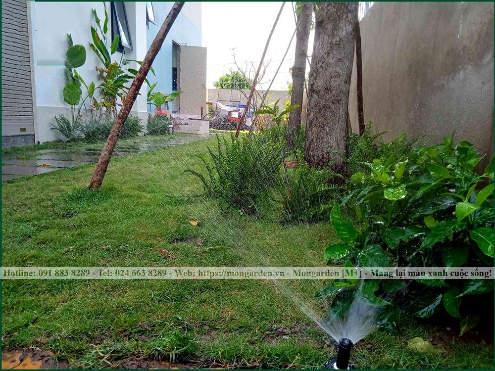 Hệ thống tưới tự động trong sân vườn