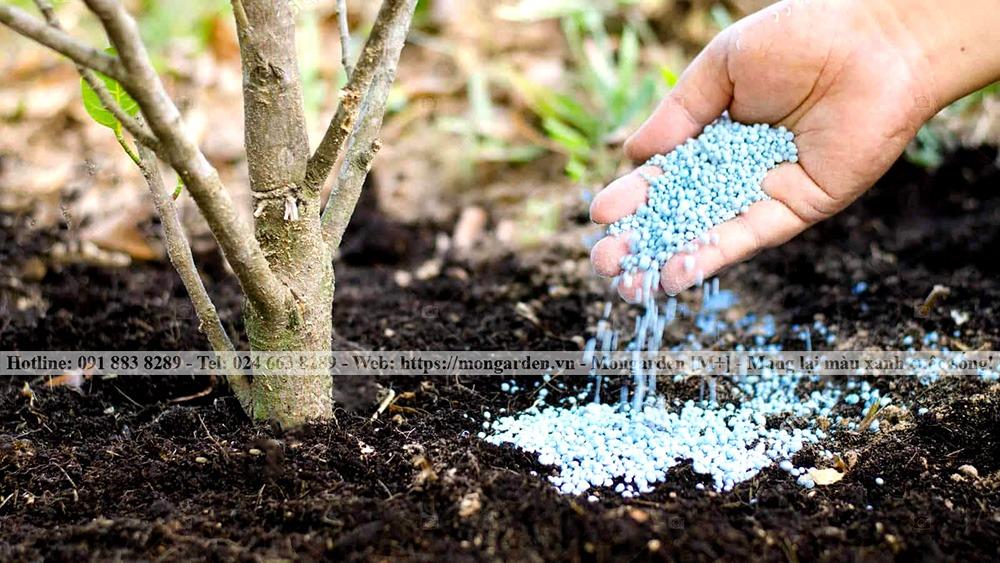Yếu tố phân bón trong chăm sóc sân vườn